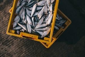 מסע דייג